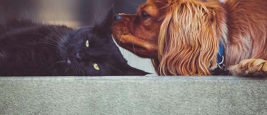 pet-insurance-VSI-1